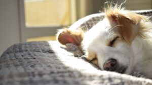3 Motivos para adoptar animales en Huelva