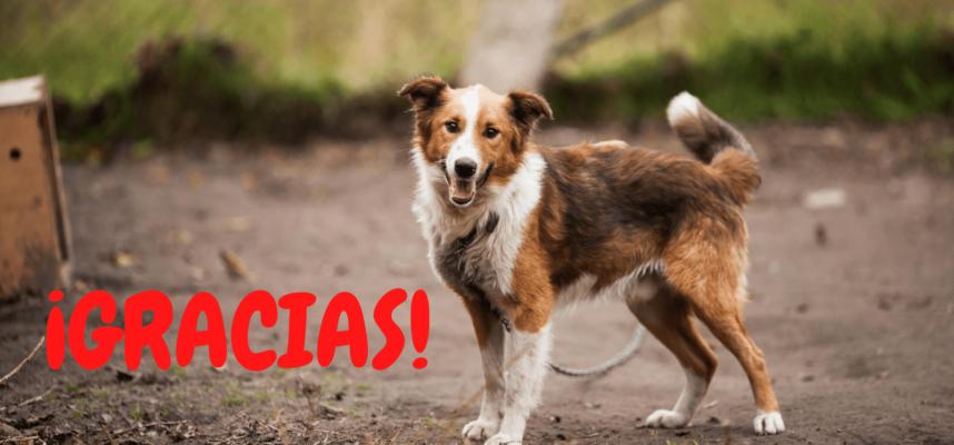 ¡Ayúdanos acogiendo o adoptando perros en Huelva!