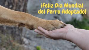 Día Mundial del Perro Adoptado