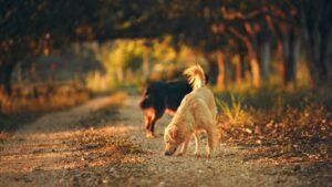 5 consejos para animales adoptados en otoño